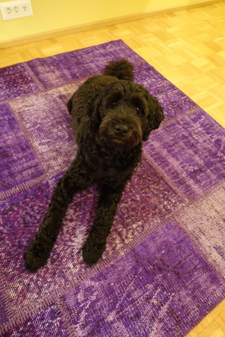 Uraäidin Ruuhkavuodet-blogissa koira on löytänyt uuden lempipaikan turkkilaisen tilkkumaton päältä.