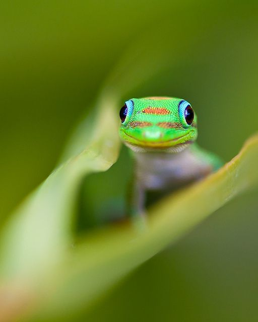 Geico Life Insurance >> Cute lizard, don't think mom would ever let me have this as a pet! :( | Payton's Board ...