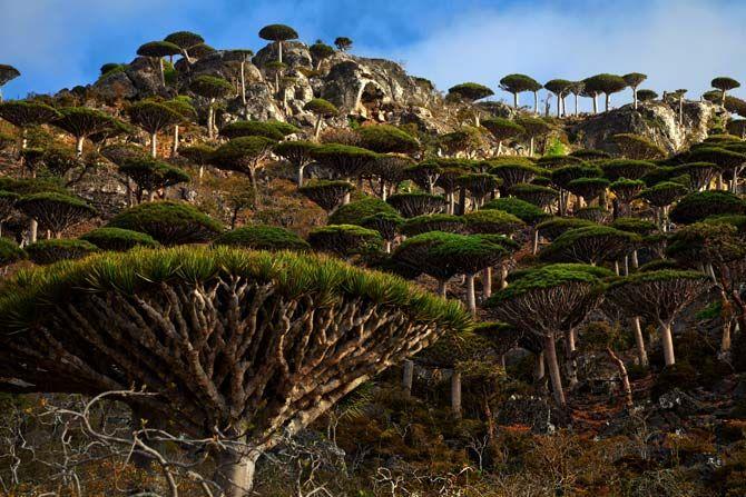 http://ngm.nationalgeographic.com/2012/06/socotra/melford-moffett-photography