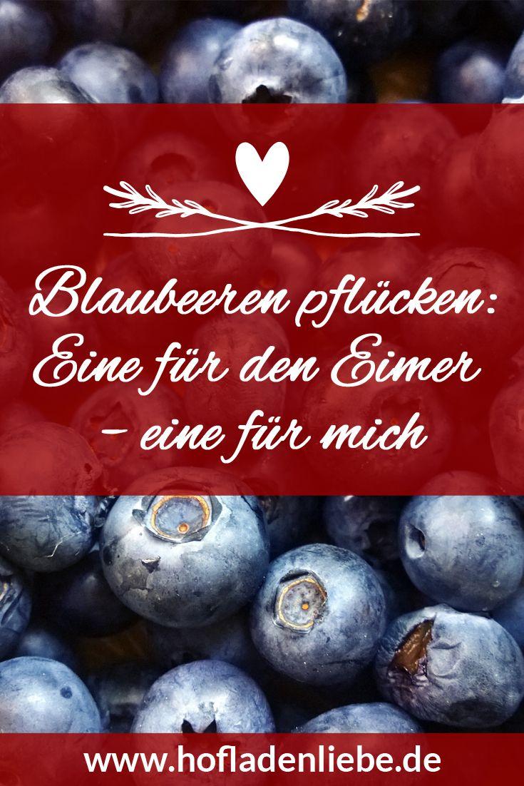 """Blog-Artikel """"Blaubeeren pflücken: Eine für den Eimer – eine für mich"""" 💙  Blaubeeren und Blaubeer-Konfitüre vom Heidehof Wittenmoor in Bargenstedt: Lies mehr auf dem Hofladenliebe-Blog"""