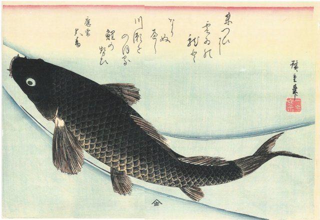 http://givernews.com/images/photo11/carpe-hiroshige.jpg