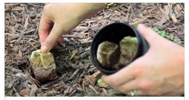 Non buttate mai le bustine da tè ma mettetele in giardino. Il motivo è sorprendente