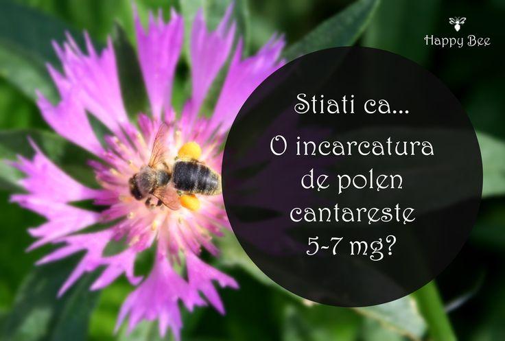 Stiati ca...  O incarcatura de polen cantareste 5-7 mg?