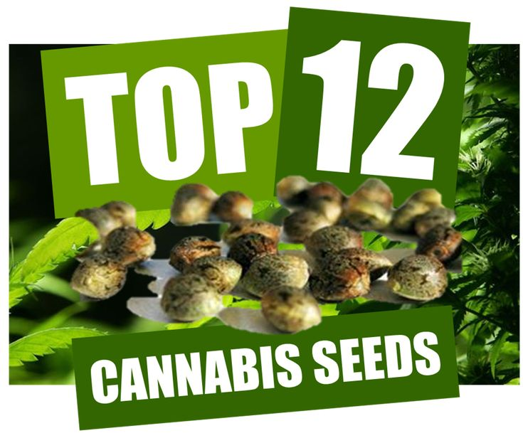 Cheap Cannabis Seeds UK | FREE SEEDS WITH EVERY ORDER | Discount Cannabis Seeds
