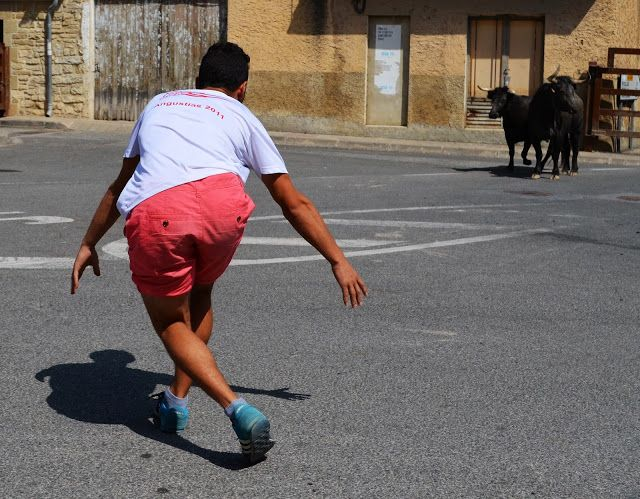 Santacara: Vacas de Pedro Domínguez de Funes (1)