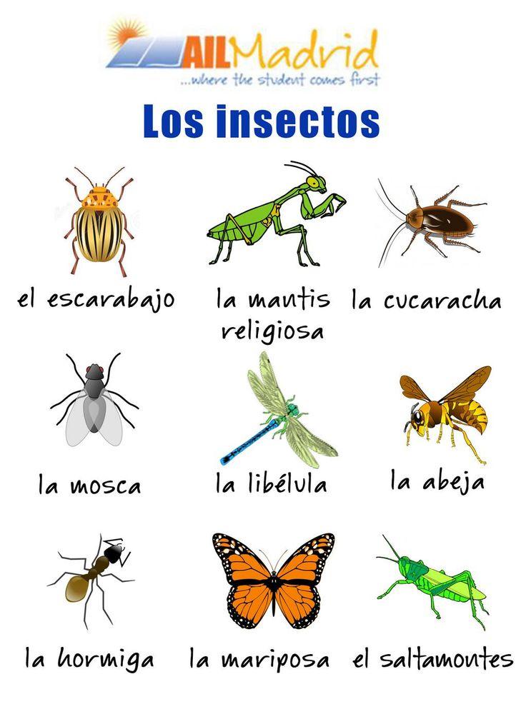 vocabulario Insectos -
