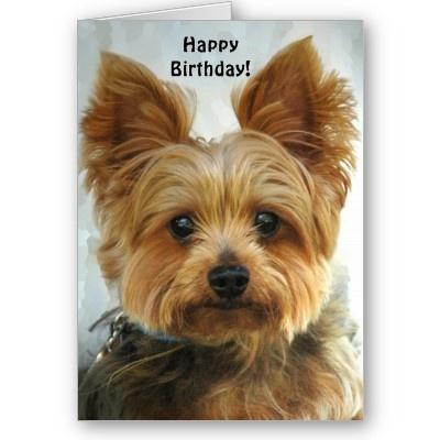 67 best Yorkie cards images on Pinterest Yorkies Birthday