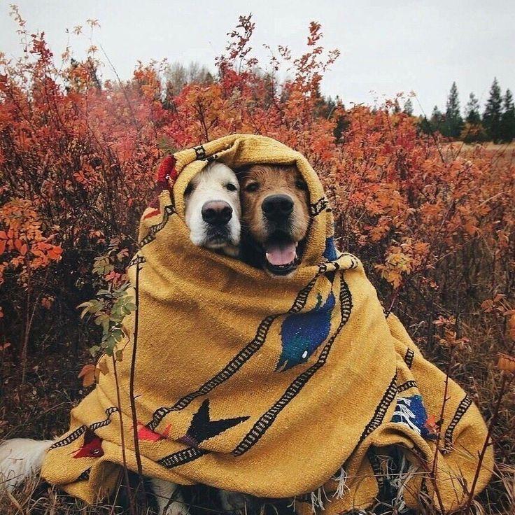 смешные фото осень пришла стремлюсь тому