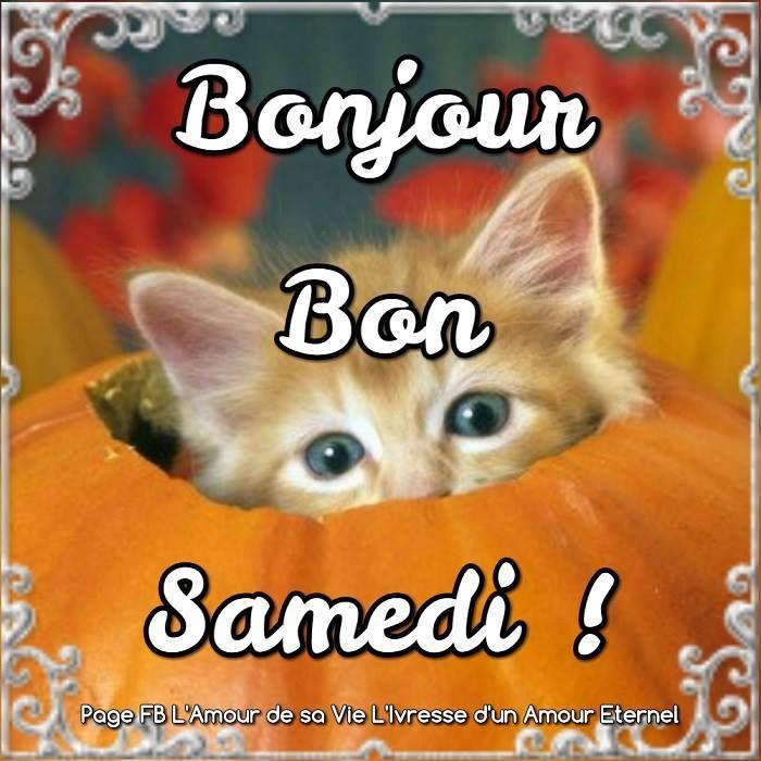 Bonjour, Bon Samedi ! #samedi halloween chat chaton mignon drole citrouille