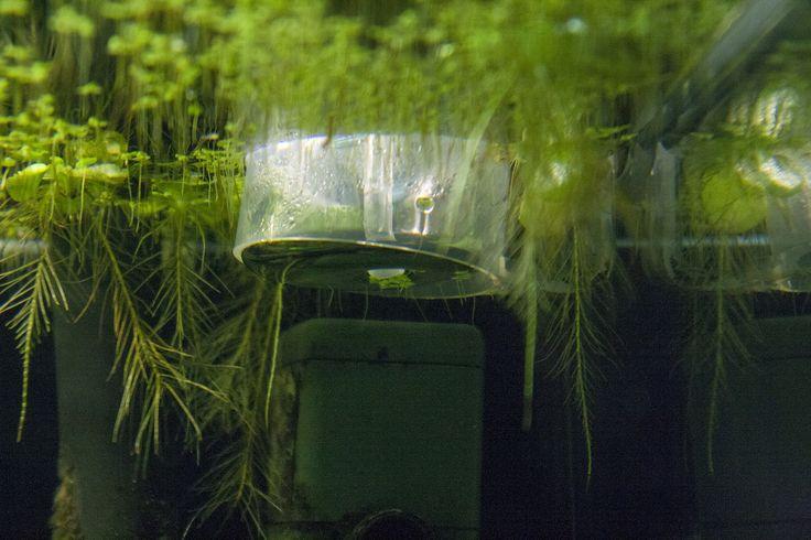 Ook met Bio CO2 beginnen? lees mijn blog bericht over hoe ik ermee gestart ben.