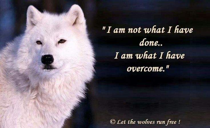 Wolf Quotes About Strength: Wolf Quotes, Animal