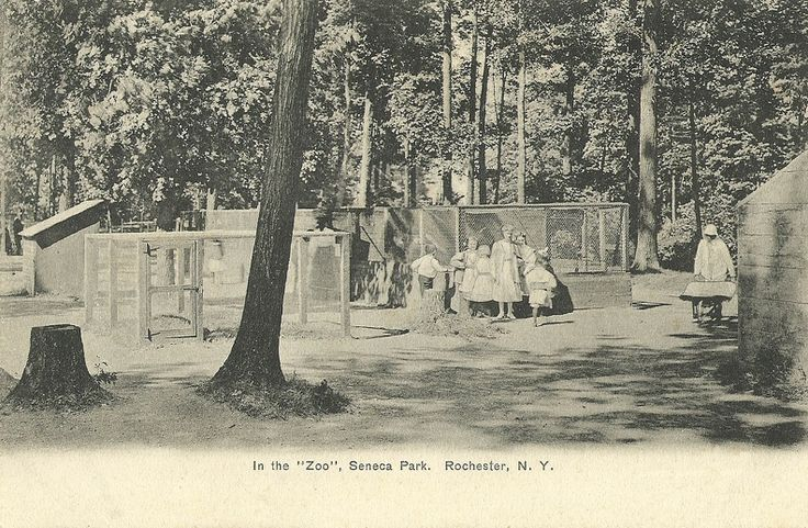 In the  Zoo , Seneca Park, Rochester, N. Y.  Dated: Between 1901 and 107 Published by: Rochester News Company, Rochester, New York Number: 2754