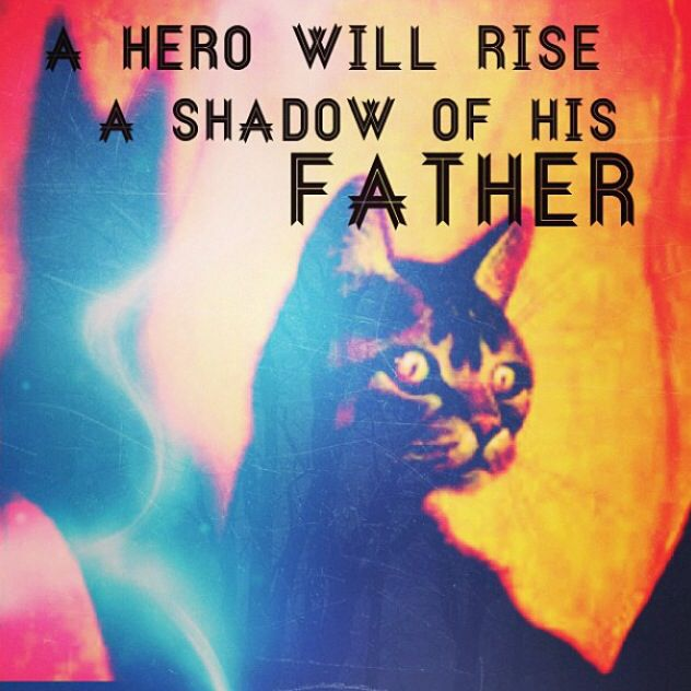 17+ Images About Warrior Cats On Pinterest