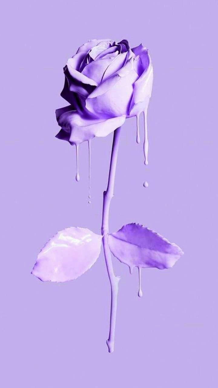 Pin On Purple Purple