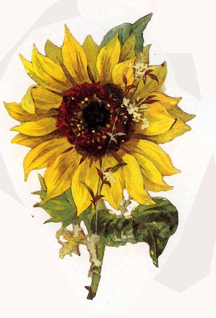 Vintage Floral Prints | ArtbyJean - Vintage Clip Art: Three different vintage flower prints