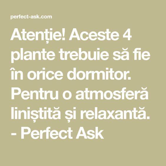 Atenție! Aceste 4 plante trebuie să fie în orice dormitor. Pentru o atmosferă liniștită și relaxantă. - Perfect Ask