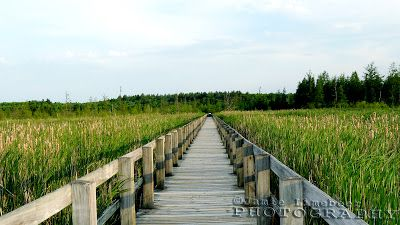 The613Hiker: The Mer Bleue Bog Trail