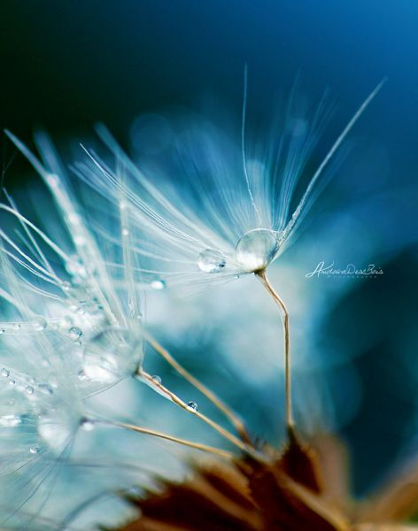 """Morning beads"" by Andoka Des Bois: Photographers Mornings, Brilliant Photography, Mornings Beads, Marco Photography, Amazing Photography, Macro Photography, Beautiful Stuff, Magic Natural, Macros Photography"