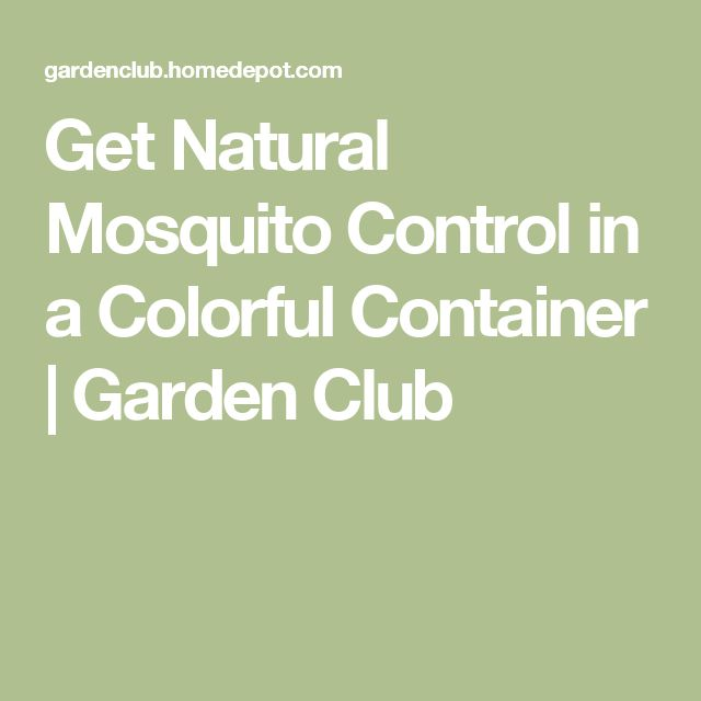 Get Natural Mosquito Control In A Colorful Container