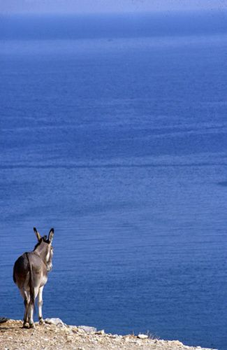 Le donkey stood upon the edge of the cliff in silent contemplation....  La Grèce, by Panayiotis Tendes