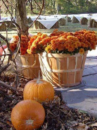 pretty: Bushel Baskets, Decor Ideas, Fall Decor, Decoration, Pumpkin, Wedding Ideas, Apples Baskets, Fall Weddings, Hay Bale