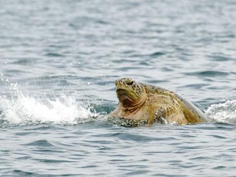 Turtle Island Park