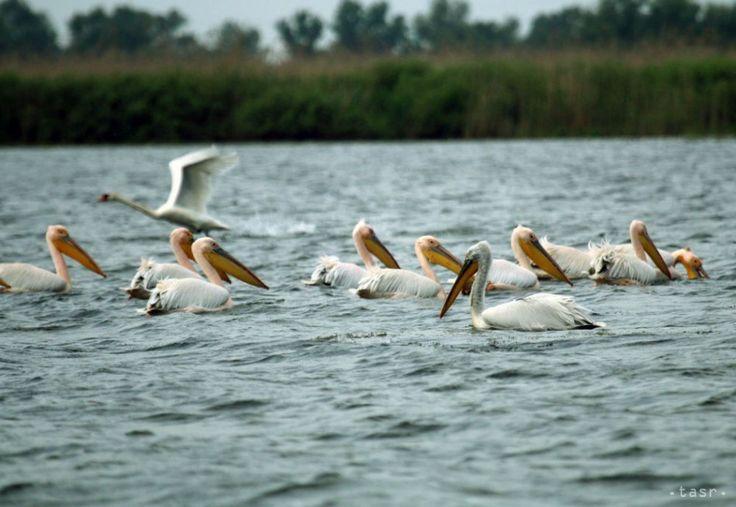 Video: Slováci zachytili úžasné fotky prírody v rumunskej delte Dunaja. Pozrite si video na našej stránke http://www.dobrenoviny.sk/c/70967/slovaci-zachytili-uzasne-fotky-prirody-v-rumunskej-delte-dunaja  #dunaj #danau #slovak #photographers #video #nature #priroda #traveling #river #birds