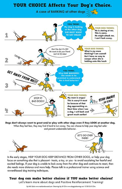 YOUR CHOICE AFFECTS YOUR DOG'S CHOICE: Barking at dogs. by lili.chin, via Flickr