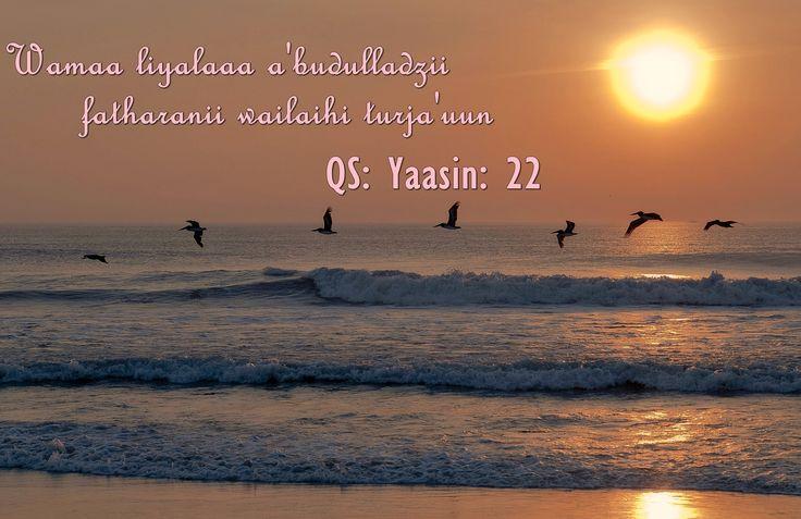 Tak ada alasan untuk tidak menyembah Allah Subhana wata'ala :)