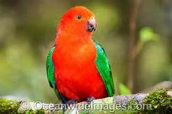 rainforest birds - Yahoo Image Search Results