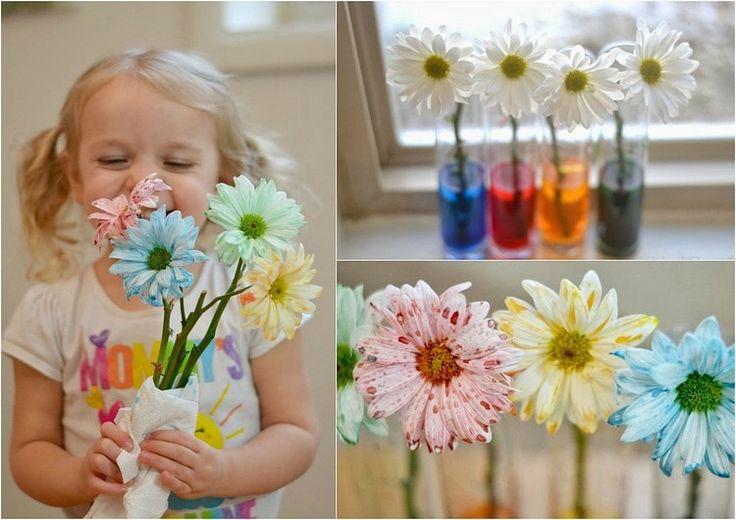Experiment für Kinder - weiße Blumen einfärben