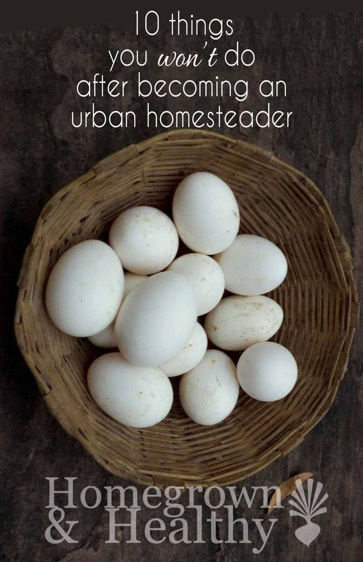 Urban homesteading opened us up to new people, and a new (more simple) way of life. Instead of focusing on all of the things we do as urban homesteaders, let's take a look at the things we won't be doing anymore now that we've claimed this title. #urbanhomesteadingideas
