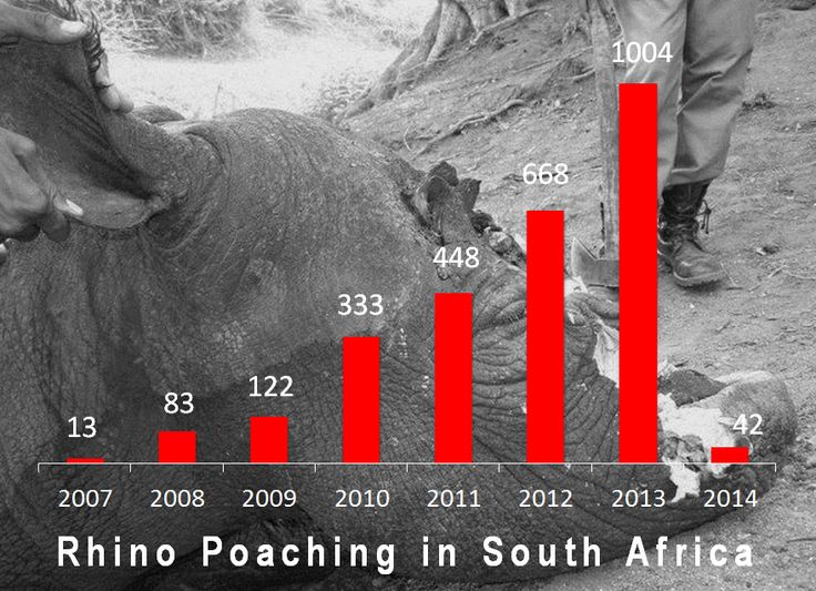 A Shameful Record:  Offical 2013 South African Rhino Poaching Stats