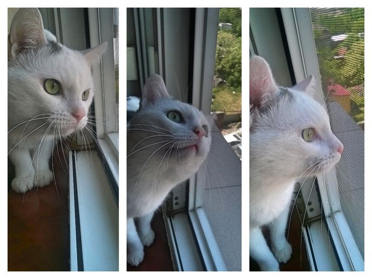 it's a bird... aaaand... it's gone #white #cat