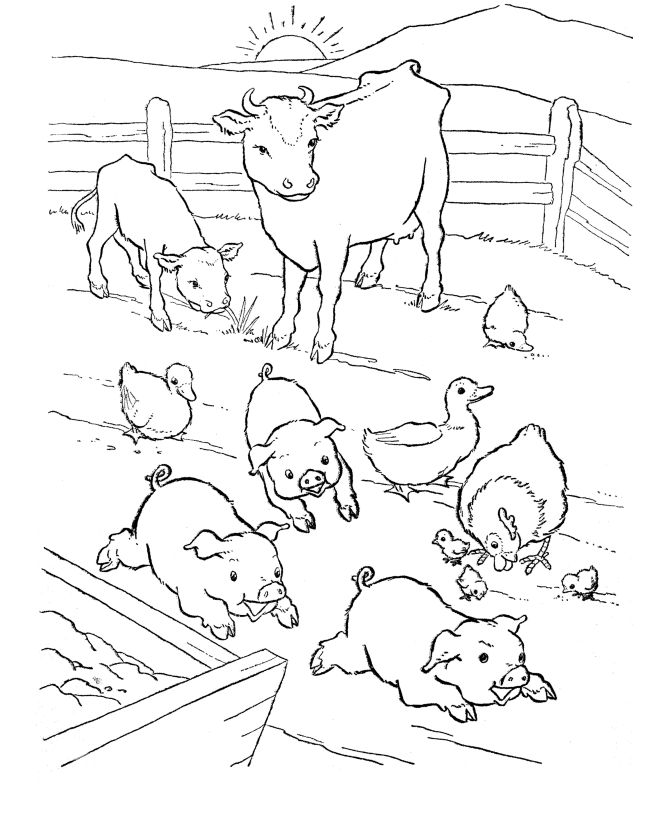 Farm animal coloring page | Barn-yard Pigs