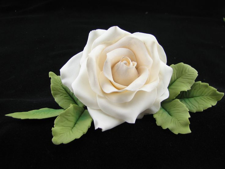 Large ivory rose with leaves