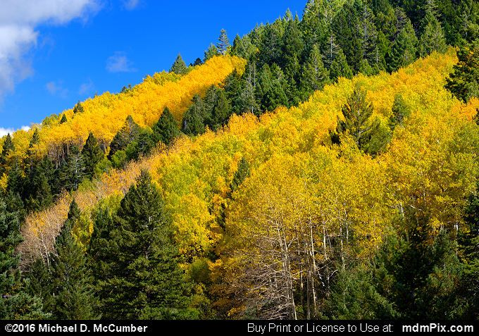 Fall Foliage Picture 029 - October 2, 2016 from Upper Karr Recreation Area, New Mexico Picture