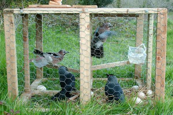 """Against larsen traps - """"Againgst Corvid Traps"""" is a campaign against this type of cage brid traps"""
