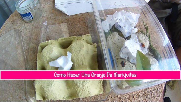 Cómo hacer una granja de mariquitas en casa | Cuidar de tus plantas es facilisimo.com