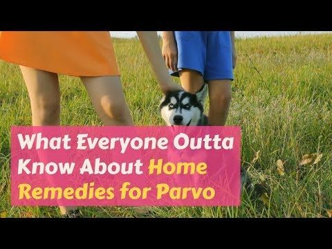 Using Home Remedies For Parvo Are Not Only Less Expensive That Treating At A Vet Clinic They Are Highly Effective In Curing Th Parvo Vet Clinics Home Remedies