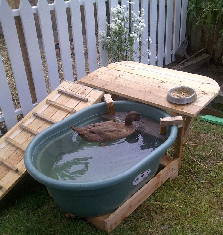 Ramp and deck built around a plastic water trough. All wood is reclaimed from shipping palettes sourced for free...