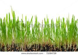 Hands On Math: What If You Grew At The Rate Of Grass?