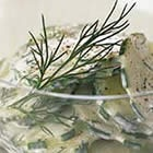 BREAKSTONE'S Cucumber-Dill Salad Recipe.  Skip the low fat mayo and sour cream and use a mix of regular sour cream and Greek yogurt - Tzatziki Salad!