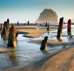 Oregon's Ghost Forest   VIA Magazine