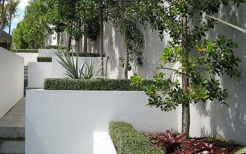 Landscape by Proscape, Auckland, featuring Corokia  'Geenty's Ghost' (PVR) instant hedges