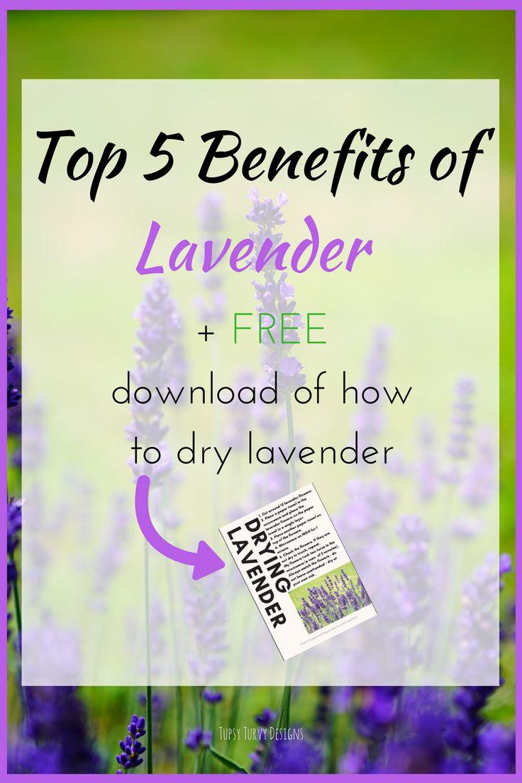 5 Top Benefits of Lavender