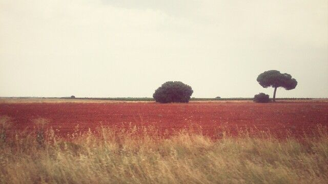 Campo rojo