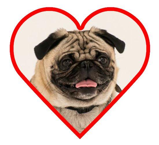 Puppy Finder Dog Breed Quiz - Talent Hounds