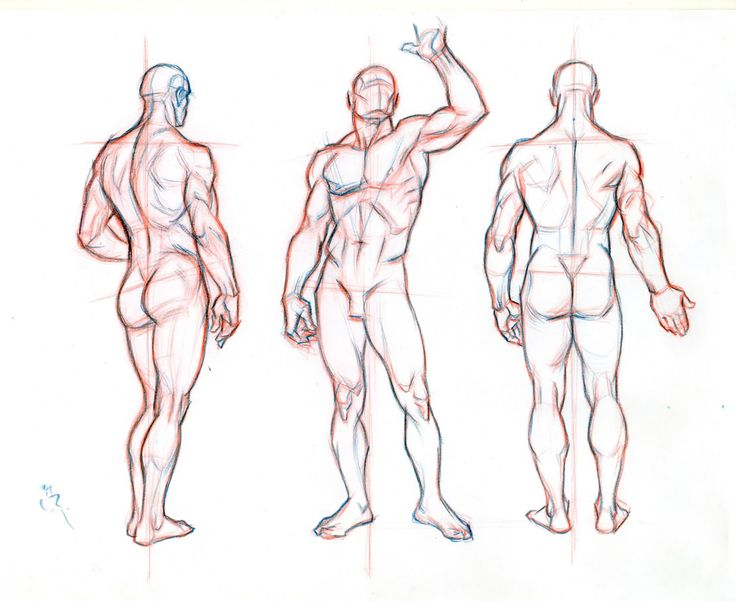12 best Male Anatomy images on Pinterest | Drawing tutorials, Human ...
