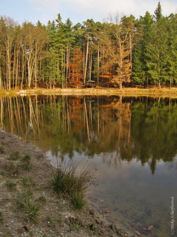 Vodní nádrž Kříž - Hradec Králové - lesy